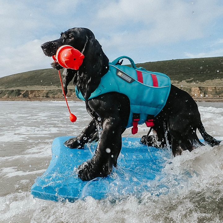 Dog Holiday to Saunton Beach Villas
