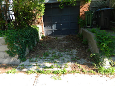 Riverdale Summer Front Garden Cleanup Before by Paul Jung Gardening Services--a Toronto Gardening Services Company