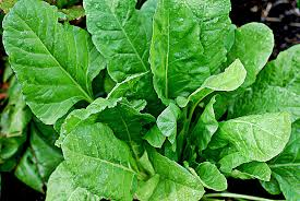 Benefits of spinach leaves