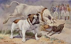 cães com focinho curto