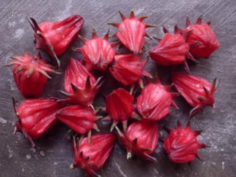 Free Traditional Medicinal Tips: Red Rosella