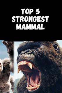 strongest mammal