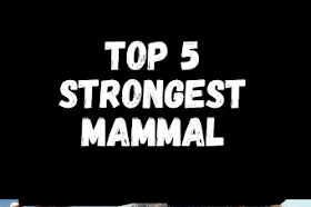 Top 5 most strongest mammal