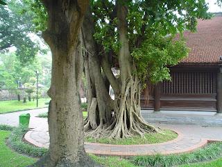 Tempio della Letteratura, Van Mieu Temple, Hanoi, Vietnam