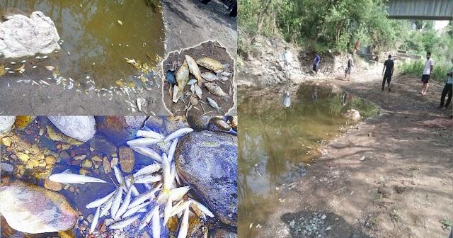 हिमाचल: चेकडैम में जहरीली दवा डाल मार दीं कई क्विंटल मछलियां, पालतू जानवर भी वही पीते हैं