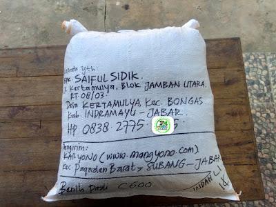 Benih Padi Pesanan  SAIFUL SIDIK Indramayu, Jabar.  (Sesudah di Packing)