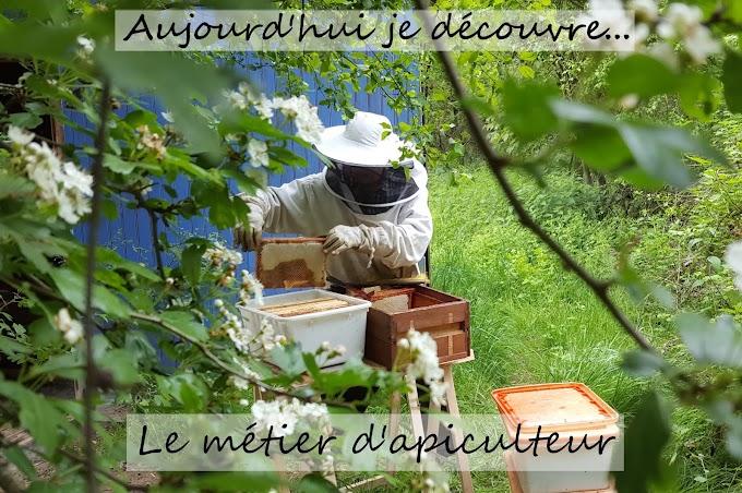 Découverte de l'apiculture naturelle et raisonnée