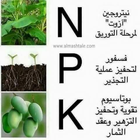 تسميد النباتات المنزلية