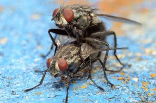 aplikasi pengusir nyamuk lalat dan tikus