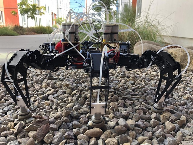 Developed Flexi-Footed Robot Races Across Uneven Grounds