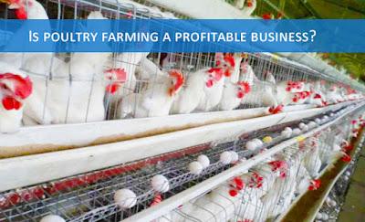 Poultry farming business