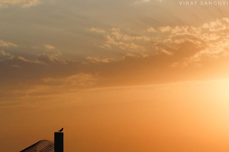"""Bird or Birds"" - Photography Contest Entry by Virat Sanghvi"