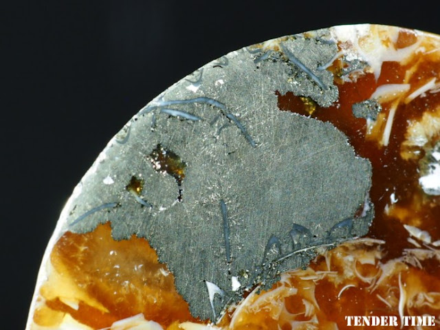 -黄鉄鉱化- デスモセラスdesmoceras sp.白亜紀Majunga, Madagascar