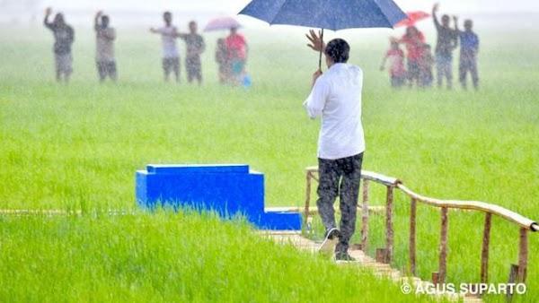 Jokowi Hujan-Hujanan Sapa Warga Sumba, Netizen: Memang Pemimpin Terbaik!