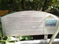Mangrove section - Kyoto Botanical Gardens Conservatory, Japan
