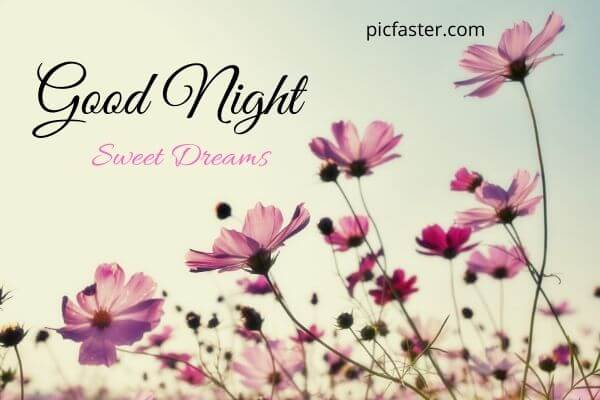 Top Beautiful Good Night Images With Flowers Download Whatsapp Dp Status Pics Picfaster