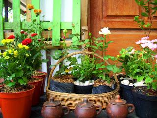 Koleksi Bunga Krisan dan Cocor Bebek Galancu Kawanimut