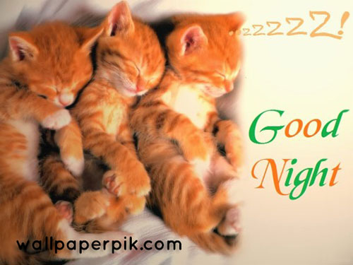 cats  good night images wallpaper download