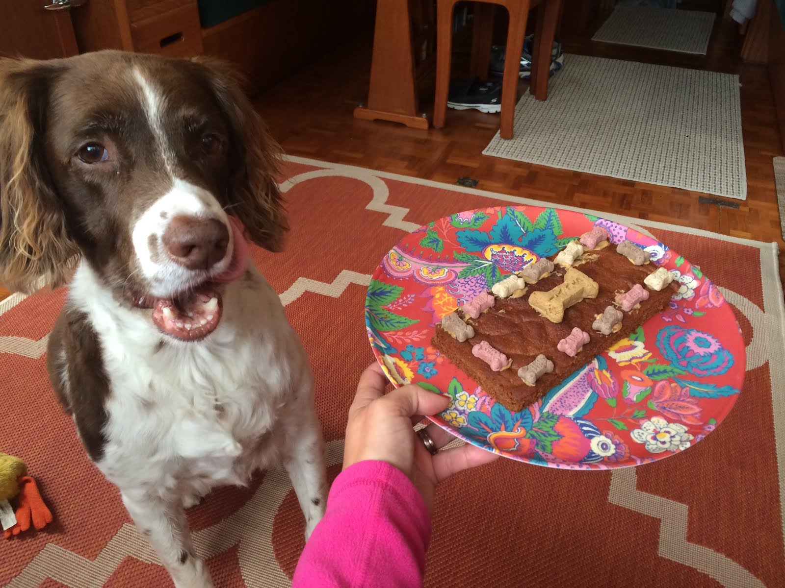 Crocket and his birthday cake