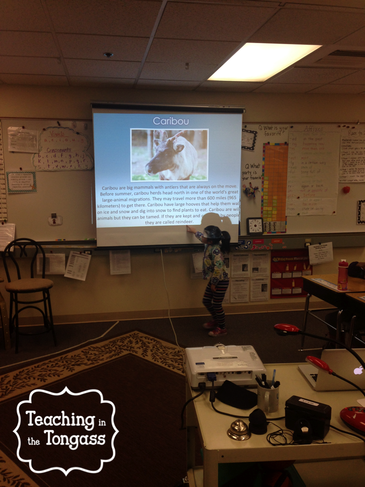 http://www.teacherspayteachers.com/Product/Arctic-Animals-PowerPoint-Photographs-Facts-and-Adaptations-1043712