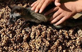 tipos de café en el mundo el kopi luwak