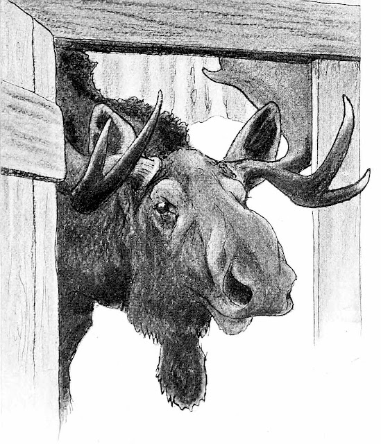 Paul Bransom illustration of a moose looking in