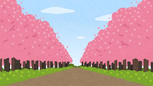 並木道のイラスト(桜)