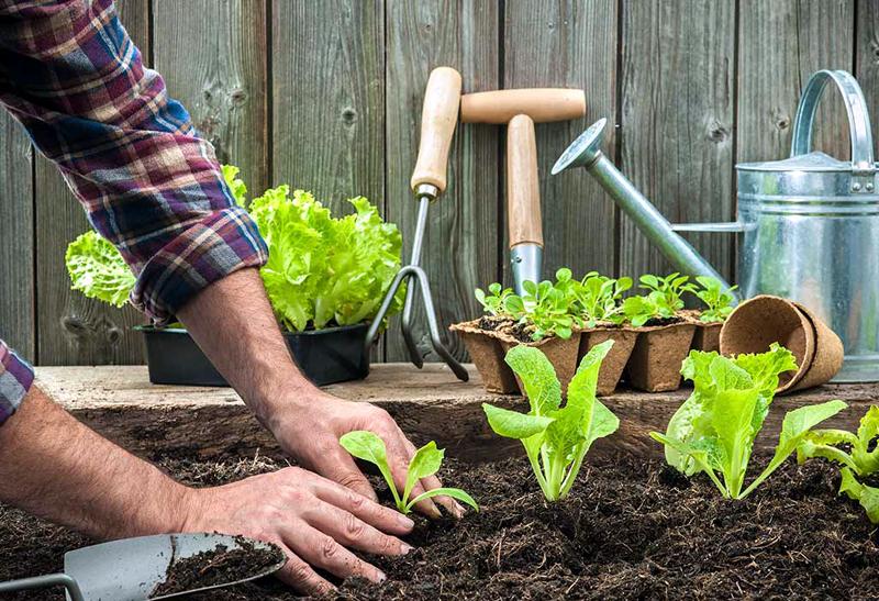 Compost Tea for Your Garden
