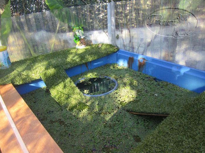 Mi jardin y mi huerto estanque de tortugas for Filtro para estanque de tortugas
