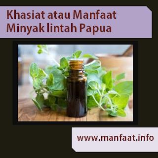 Khasiat atau Manfaat Minyak Lintah Papua