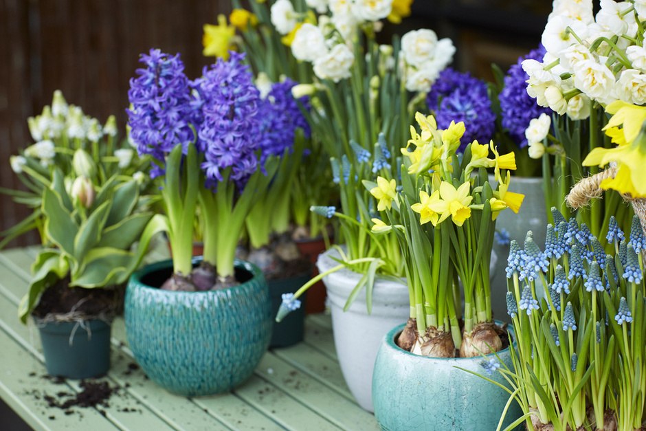 Bulbs to plant in february-1876