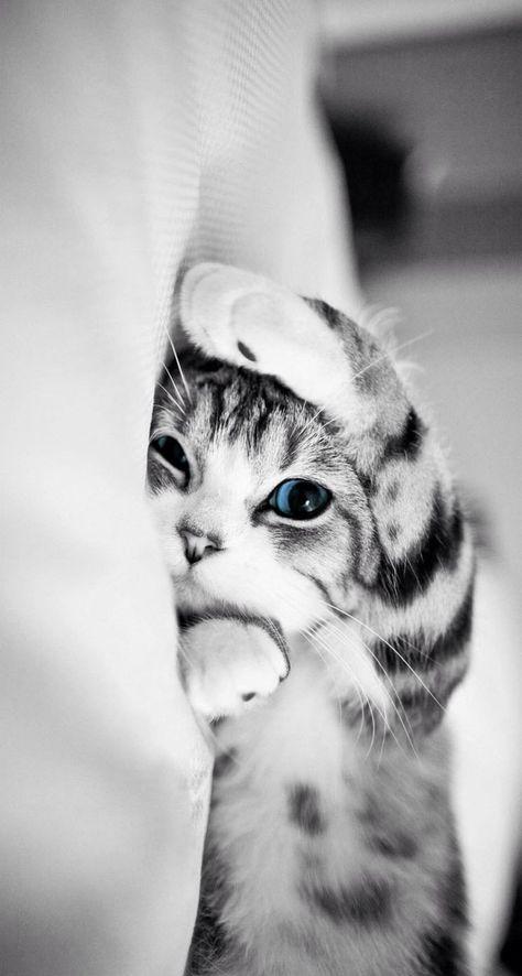 hình nền điện thoại mèo con đáng yêu