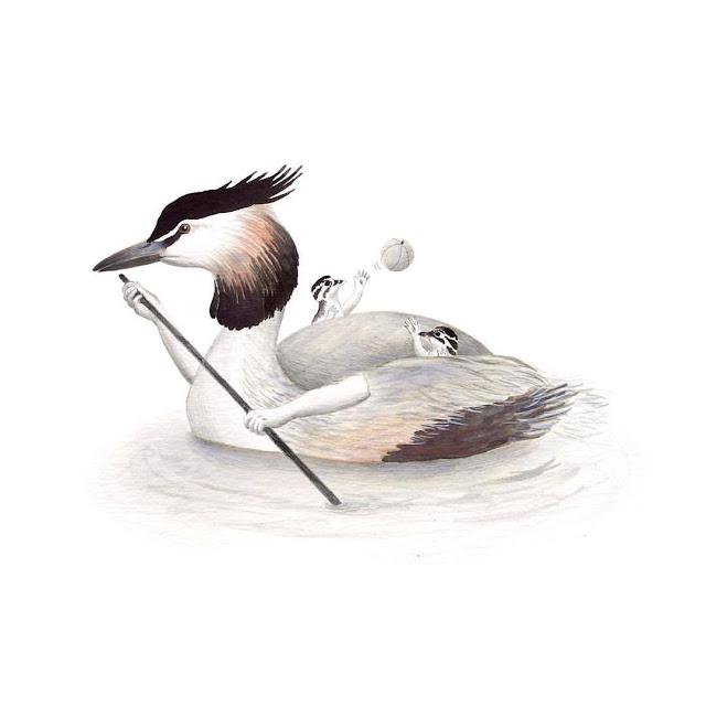 ilustración de pájaros, somormujo lavanco, aves de la albufera, podiceps cristatus, ilustración de aves, aves acuáticas, garza, Inktober, Inktober 2017,