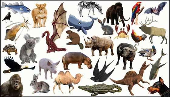 اسماء الحيوانات بالفرنسية