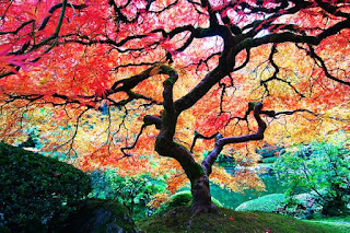 الحديقة اليابانية المذهلة أمريكا japanesegarden1.jpg
