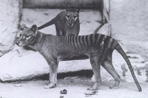 11 recently extinct animals photographs and