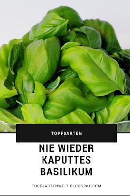 Nie wieder kaputtes Basilikum - das ist der Trick! #basilikum #topfgarten #basilikumpflege #basilikumimtopf #niewiederkaputtesbasilikum #tippsundtricks Gartenblog Topfgartenwelt