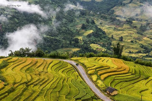September - rice season is ripe - picturesque Northwest scenery