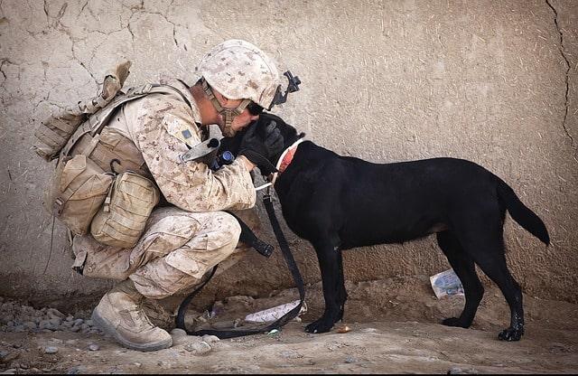 معلومة عن الكلاب