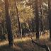 ZPP Meio Ambiente: Sombra das árvores pode reduzir custos com ar condicionado