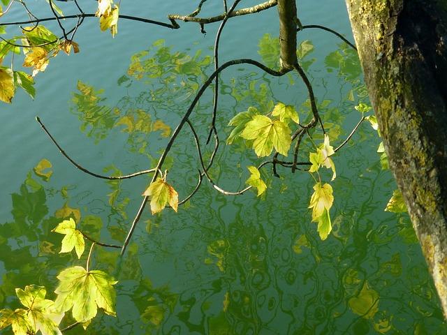 ảnh lá vàng mùa thu