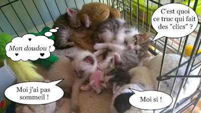 C'est la saison des chatons !