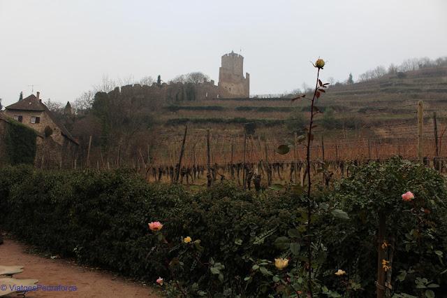Castell de Kaysersberg, Alsàcia, Ruta del Vi, França