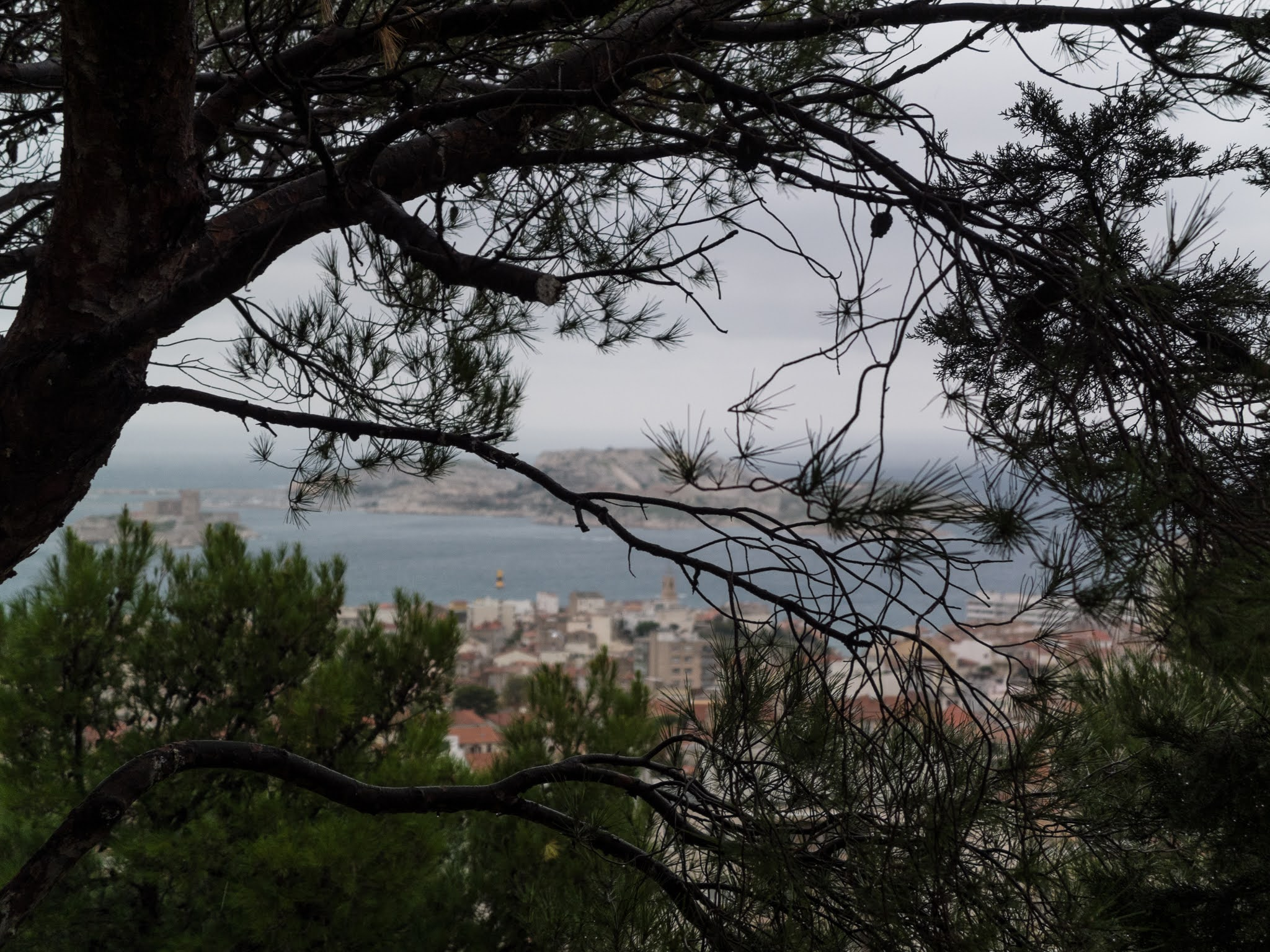 View of Les Îles du Frioul behind a large pine tree.