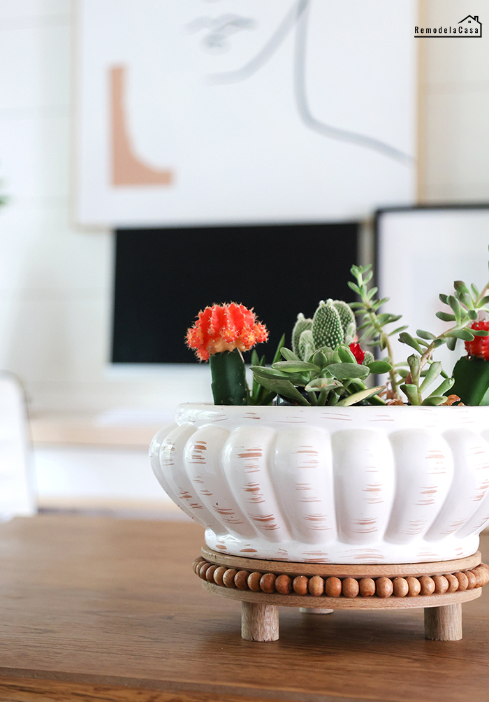 Thrifty bowl with succulents