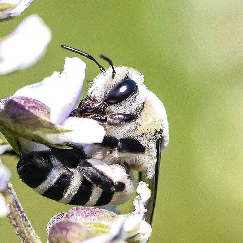 Por $1000 mensuales puede adoptar una abeja