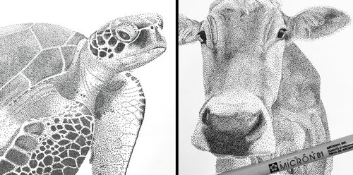 00-Animals-Drawings-Kelsey-Hammerton-www-designstack-co
