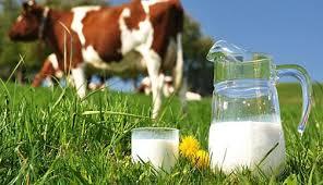 Süt ve Besi Hayvancılığı nedir