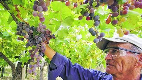 El mejor vino tinto del mundo del 2014