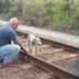 MALDADE SEM LIMITES: Cachorrinha é encontrada amarrada aos trilhos do metrô